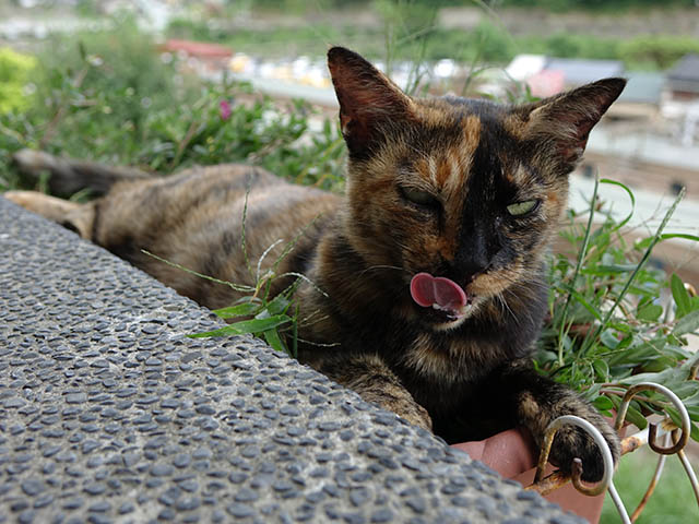 Cats of Houtong, #4189