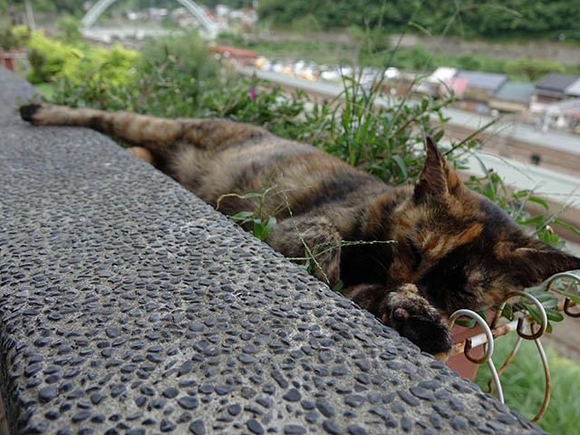 Cats of Houtong, #4190