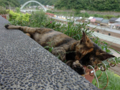 Cats of Houtong, #4191