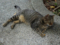 Cats of Houtong, #4195