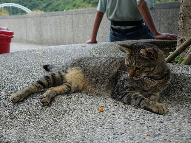 Cats of Houtong, #4196