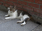 Cats of Houtong, #4198
