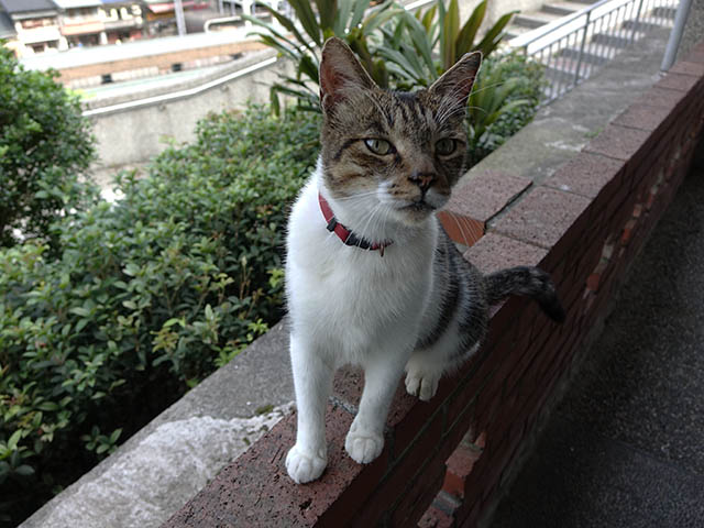 Cats of Houtong, #4203