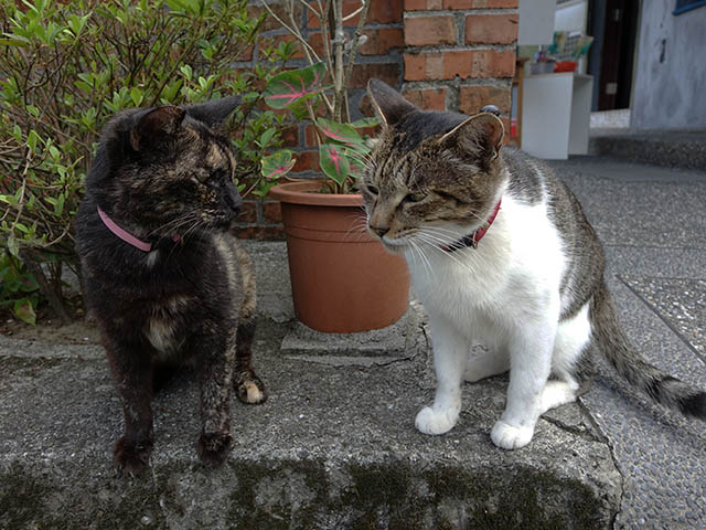 Cats of Houtong, #4215