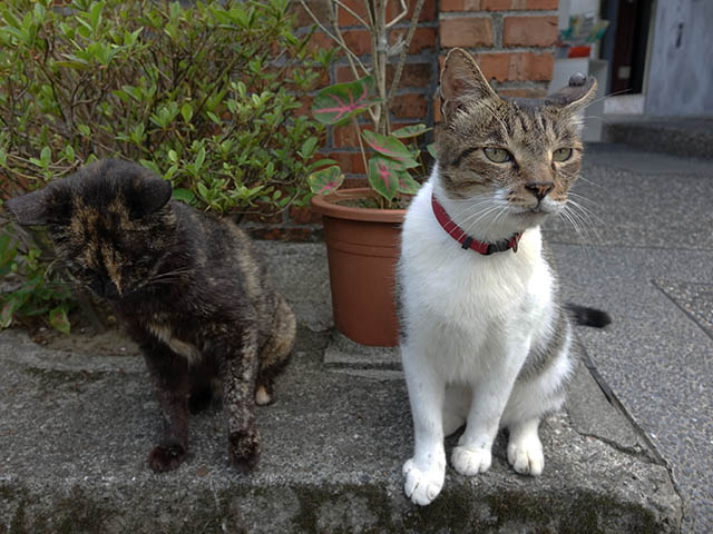 Cats of Houtong, #4216