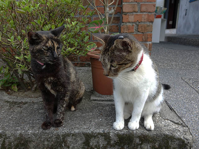 Cats of Houtong, #4217