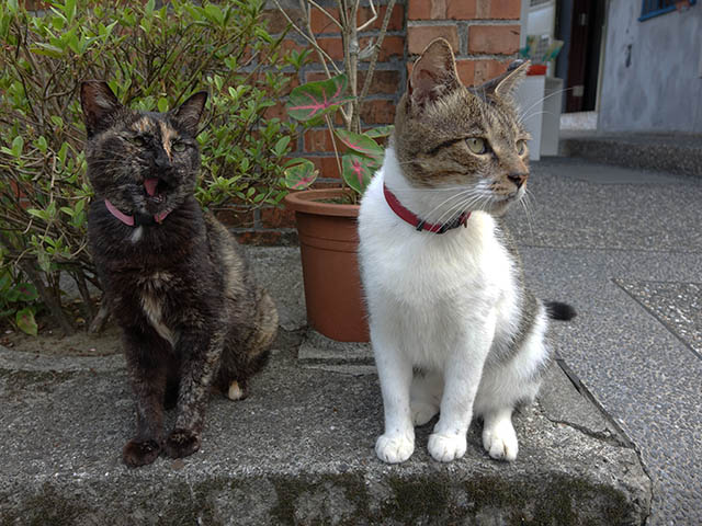 Cats of Houtong, #4218