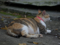 Cats of Houtong, #4220