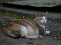 Cats of Houtong, #4221