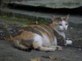 Cats of Houtong, #4222