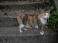 Cats of Houtong, #4224