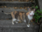 Cats of Houtong, #4225
