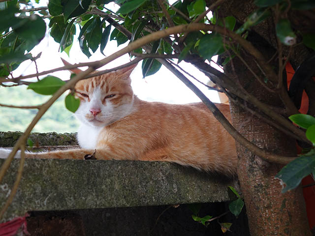 Cats of Houtong, #4233