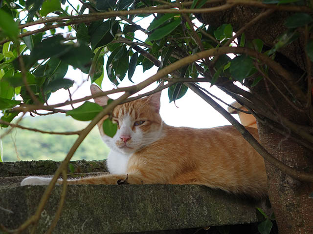 Cats of Houtong, #4234