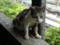 Cats of Houtong, #4235