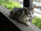 Cats of Houtong, #4236