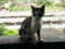 Cats of Houtong, #4238