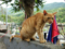 Cats of Houtong, #4240