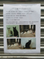 Missing Cats of Houtong, #1184