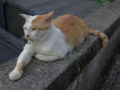 Cats of Houtong, #4258