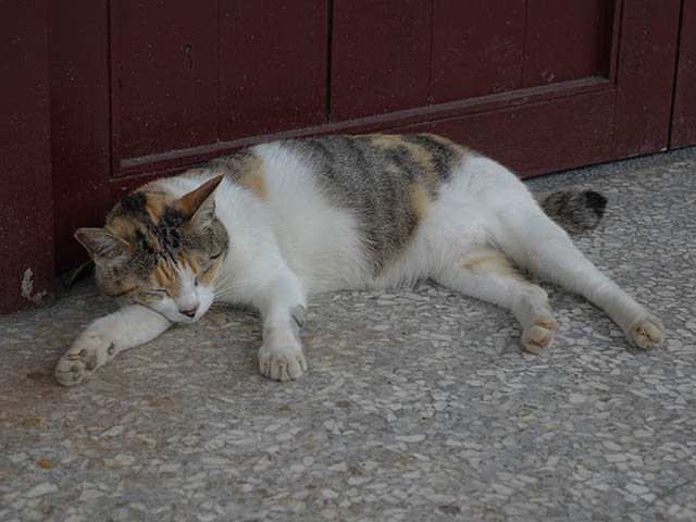 Cats of Houtong, #4324