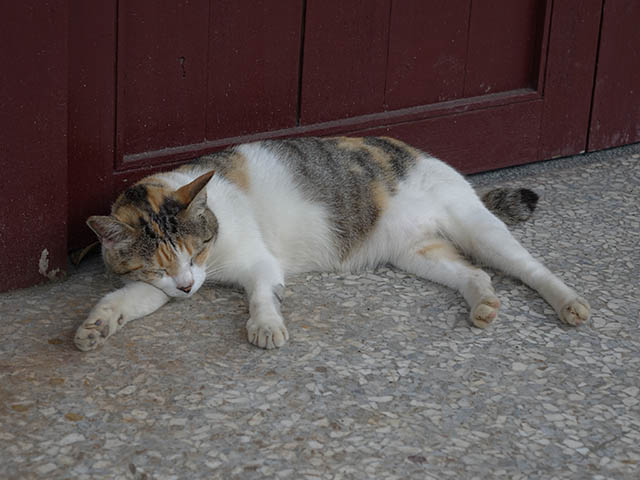 Cats of Houtong, #4325