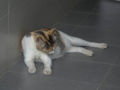 Cats of Houtong, #4339