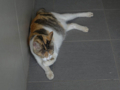 Cats of Houtong, #4341