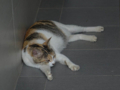 Cats of Houtong, #4344