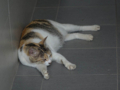 Cats of Houtong, #4345
