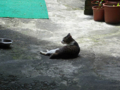 Cats of Houtong, #4347