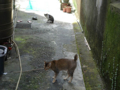 Cats of Houtong, #4350