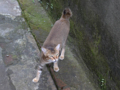 Cats of Houtong, #4351