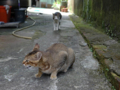 Cats of Houtong, #4352