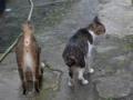 Cats of Houtong, #4353