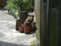 Cats of Houtong, #4354