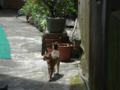 Cats of Houtong, #4355
