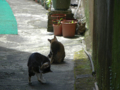 Cats of Houtong, #4356