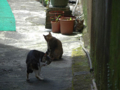 Cats of Houtong, #4357
