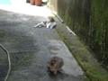Cats of Houtong, #4358