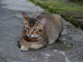 Cats of Houtong, #4359