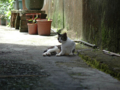 Cats of Houtong, #4360