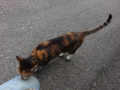 Cats of Houtong, #4362