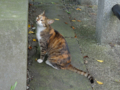 Cats of Houtong, #4364