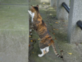 Cats of Houtong, #4365