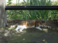 Cats of Houtong, #4366