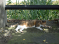 Cats of Houtong, #4367