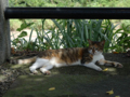 Cats of Houtong, #4368