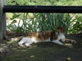 Cats of Houtong, #4369