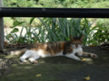 Cats of Houtong, #4370